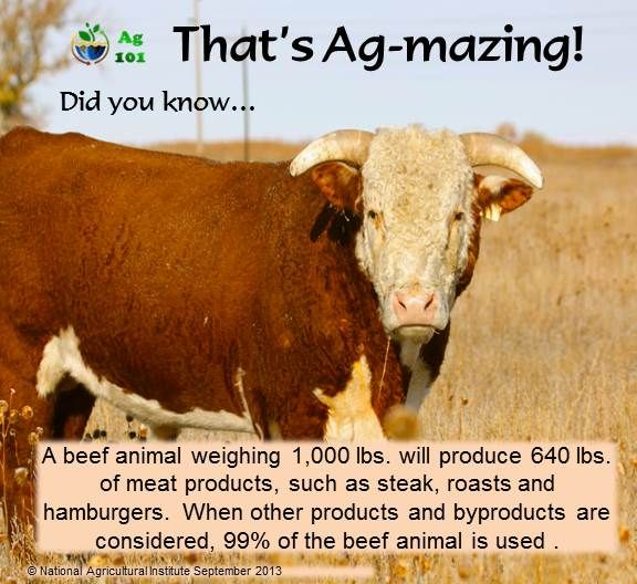 Some good-to-know Ag-mazing facts about beef. Did you know a 1,000 lb beef animal will product 640 lbs of meat?