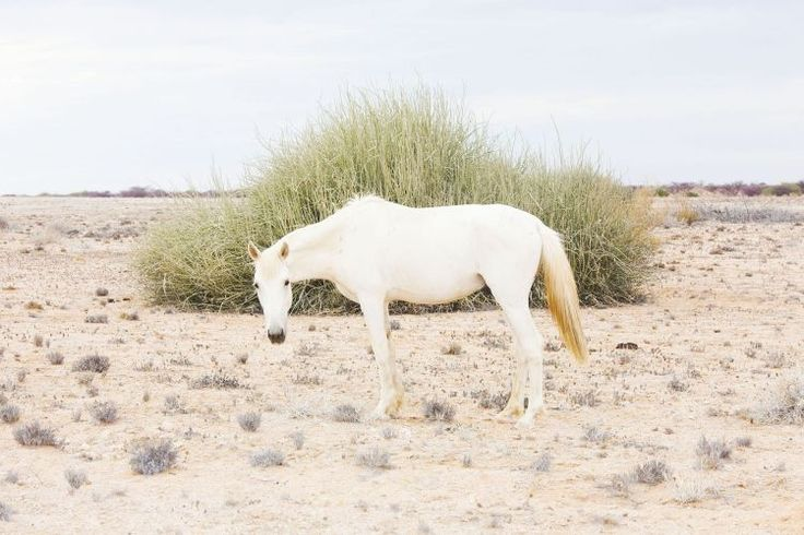 Horse in the Namib Desert Пустыня Намиб на фотографиях Maroesjka Lavigne - Ярмарка Мастеров - ручная работа, handmade