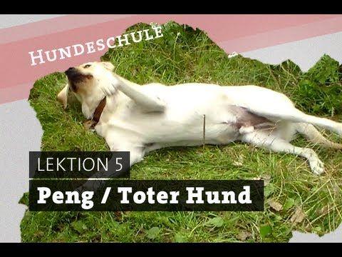 Hund PENG beibringen   BANG Hundetrick dog tricks tutorial   tot stellen...