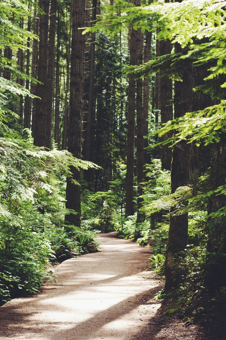 Pacific Spirit Park, Vancouver -thelocalvisitor.com #vancouver #nature #walks #canada #britishcolumbia