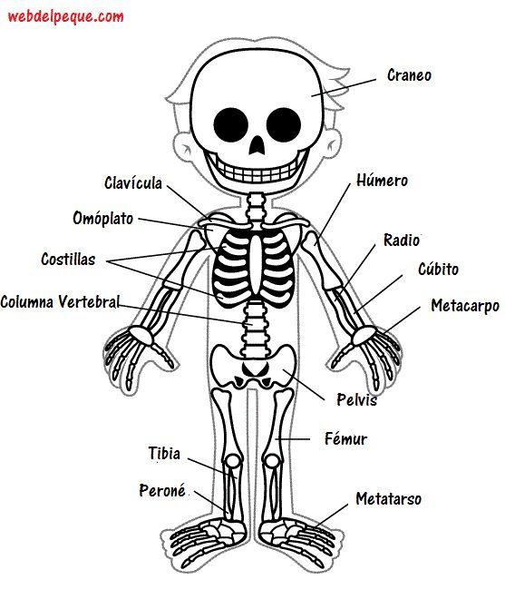 933 best nuestro cuerpo images on Pinterest  Montessori School