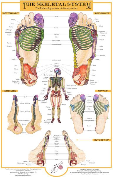 http://balancingtouch.ca/wp-content/uploads/2010/11/skeletal-system-chart-2008.jpg