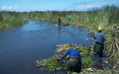 Invasive clearing in Cape Town: Khayelitsha.    Sections of the EersteKuils River as well as wetlands alongside high-density housing suburbs in Khayelitsha, Cape Town, were the focus of an inter-departmental project between the departments of Transport, Roads and Stormwater, City Parks and the Invasive Species Unit (ISU).