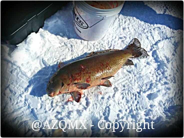 #Ice #Fishing - #fish #artic #antartic #sturgeon #snow #cold - #artico #antartico #pesca en el #hielo - #perca #pescado - #is #fisk -  @bw.phhotos  @blackandwhite_art