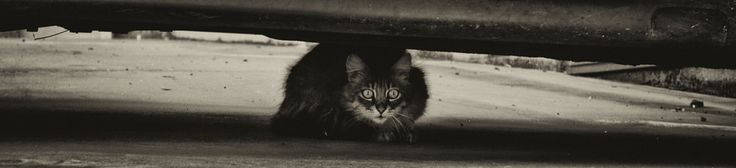 shelter by Marco Melis on 500px