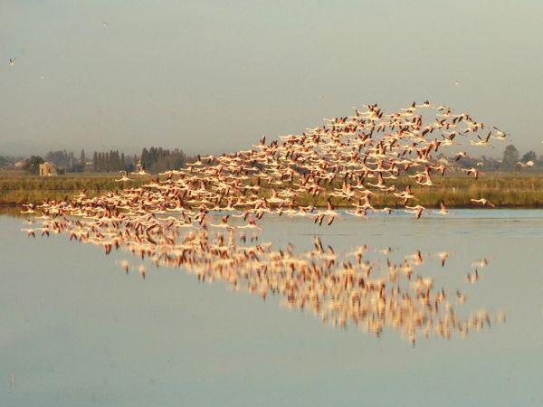 Salinenpark von Cervia, im Salinenpark können Sie wunderbare Naturumgebungen mit zahlreichen Tierspezies wie Rosaflamingo und Säbelschnäbler bewundern. Zweifellos ist ein einzigartiges Erlebnis, ein Paradies für die Vogelbeobachter und die ganze Familie! Worauf warten Sie noch? <3 http://www.bravoreisen.com/salinenpark-von-cervia-gef%C3%BChrte-besuche.html <3