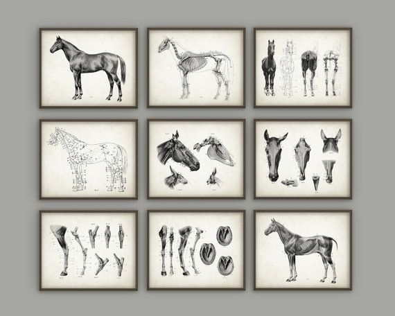 Horse Anatomy Posters Set of 9  Horse by QuantumPrints on Etsy
