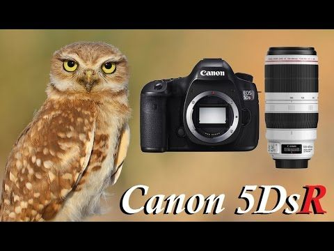 Zanjero Park: Wildlife Photography - Burrowing Owls - Canon 5DsR & EF…