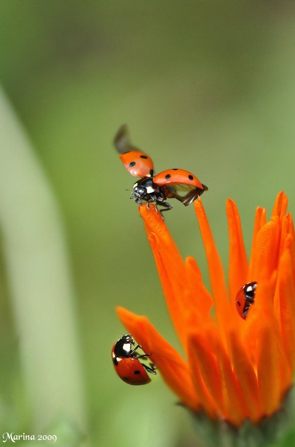 lady bugs bees flowers - photo #43