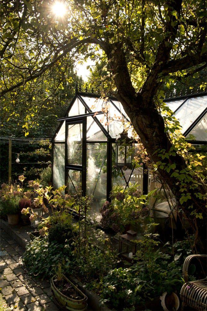 My loving home and garden: Efterårets smukkeste lys