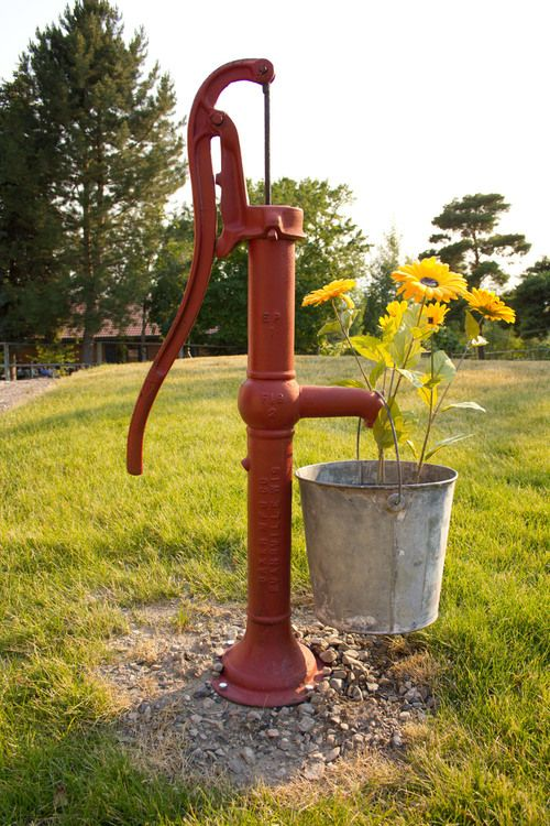 Red Well & Bucket Of Sun Flowers