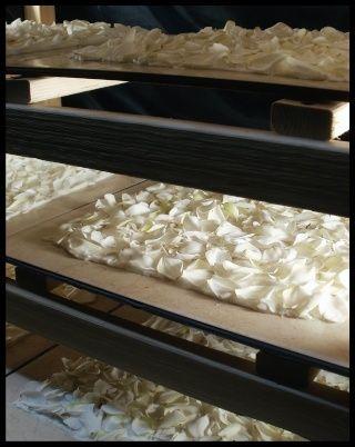 GARDENIA ENFLEURAGE .25 ml PREMIUM PERFUME SAMPLE (Spring 2012)