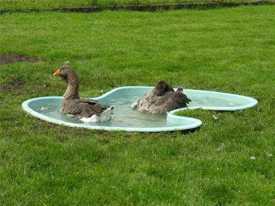 Des algues dans votre piscine? Une piscine devenue verte? Comment rattraper l'eau de façon efficace en peu de temps? Voici la méthode flash pour éradiquer les algues vertes.