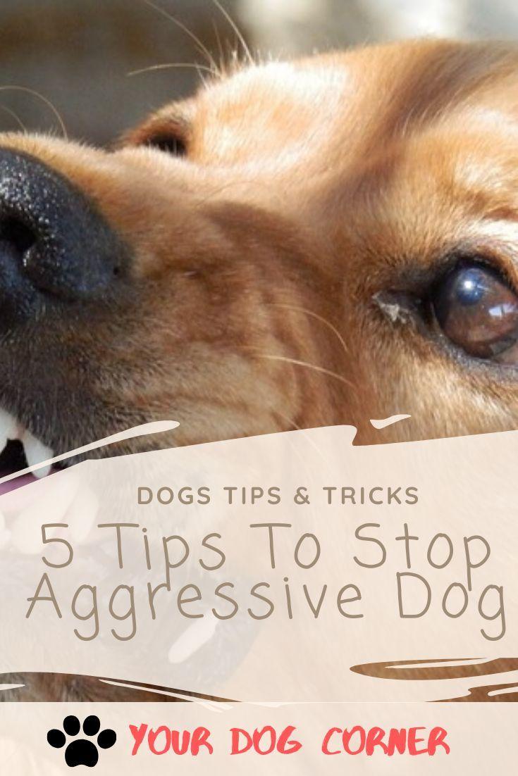 93046c06061fe3e9964fc2240bf0f160 - How To Get A Dog To Stop Aggressive Biting