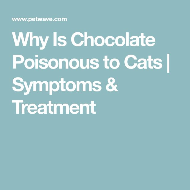 Why Is Chocolate Poisonous to Cats | Symptoms & Treatment