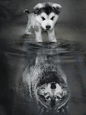 Dog to Wolf Square Diamond Painting