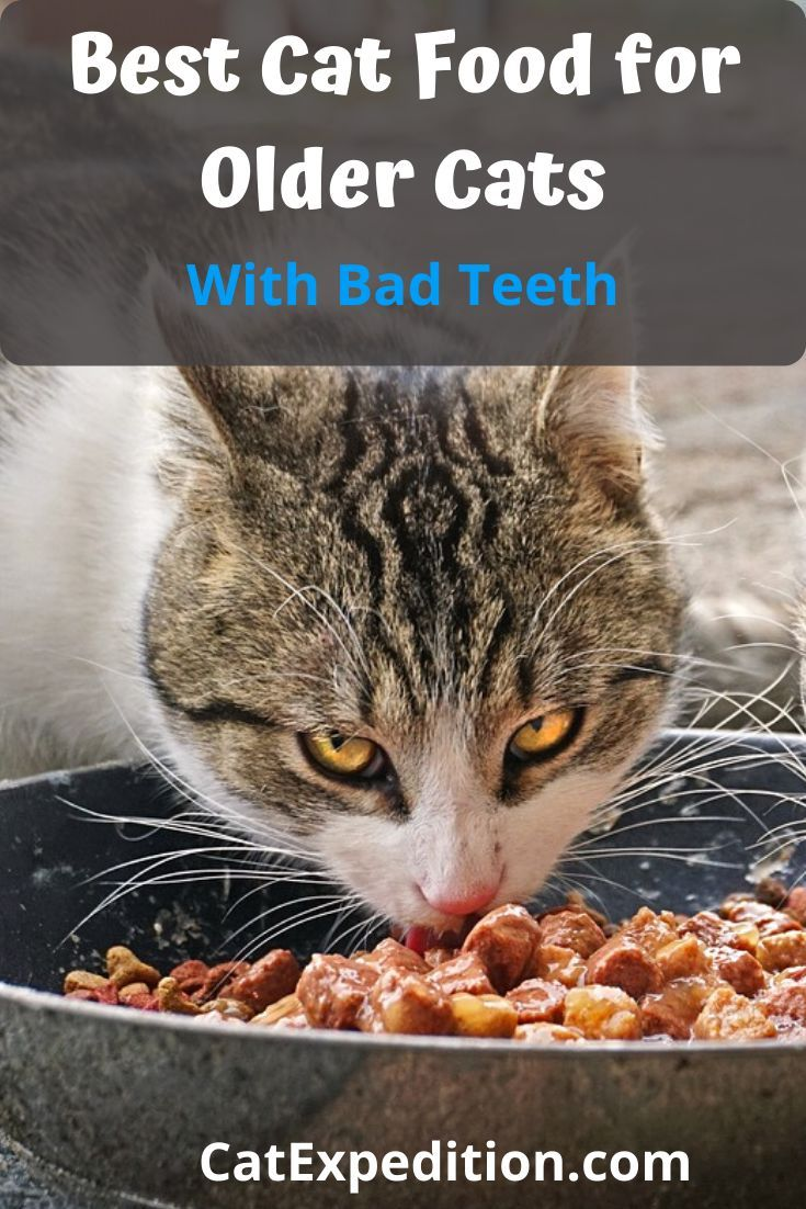 Best Cat Food For Older Cats With Bad Teeth In 2020 Best Cat Food Older Cats Cat Food