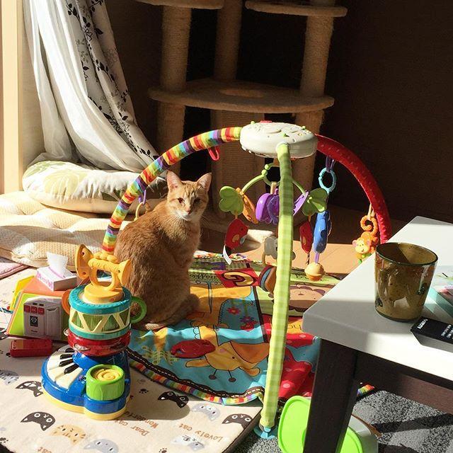 今日も弟のおもちゃの安全点検に余念がない市ちゃん。 . . #チェック済にはもれなく #市ちゃんの目ヤニ付き #いつもご苦労様です #かわいい#mycat#ネコ#猫#ねこ部#cat#ニャンコ#多頭飼い#愛猫#cute#pet#INSTACAT#happy#モフモフ#ぬこ#肉球  #Pretty#neko#CATLOVERS#ペット#自由猫#猫バカ#kitty#茶トラ#盲目#meow#全盲ネコ