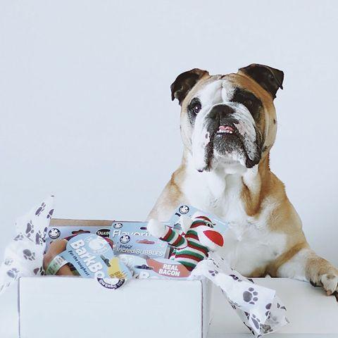 Unique | Interactive Pet Toys . Cute 📷 @girlplusbulldogs