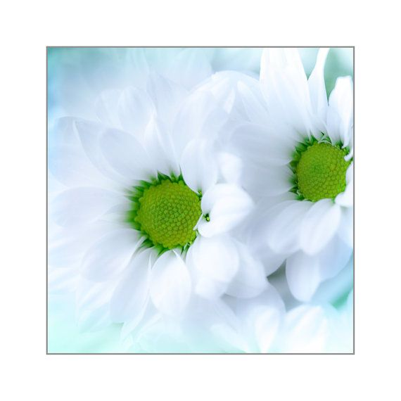 """""""The earth laughs in flowers.""""  Ralph Waldo Emerson  Spring Photography  Daisy Flower Print  by CrionnaPhotography, $25.00"""