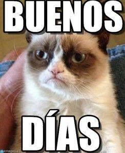 Memes graciosos de Buenos Días para compartir en WhatsApp \u2013 Imágenes para whatsapp