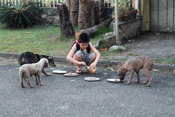 Este muchacho se llama Ken, tiene 9 años y tiene su propio santuario para perros y gatos rescatados. Mira su página web: http://www.happyanimalsclub.org/  Más fotos de el y sus animales puedes ver aquí: http://huff.to/1hiyTfh