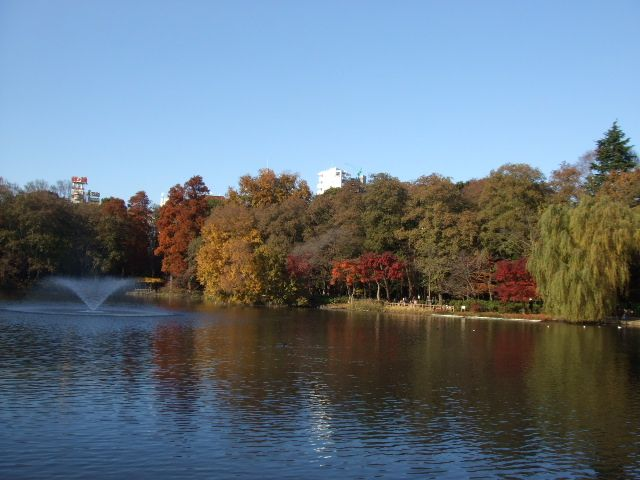Inokashira Park in Kichijoji.  Beautiful park, with nice paddle-boats that are great for elementary school kids.  Kichijoji is a vibrant community with great shops and cafes.  秋の井の頭恩賜公園