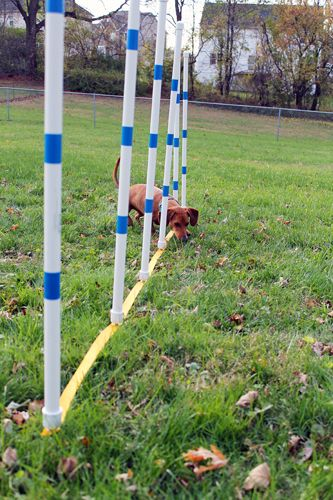 I'm at the point in my Dog Agility training that I'm going to start learning how to do weave poles. Learning to do weave poles is one of the most challenging things in Dog Agility, so mom says it's...