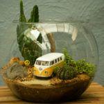 Os MiniMundos: terrários e minijardins que levam verde em miniatura às grandes cidades