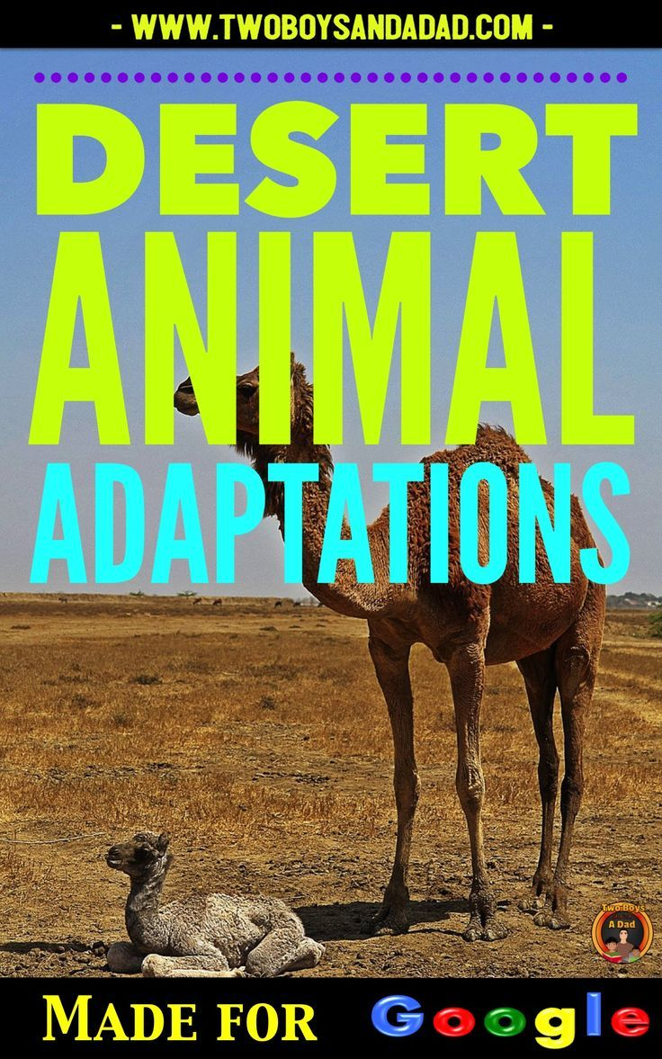 Integrate technology with learning about desert animal adaptations using this Google Slides Interactive Digital Notebook.  Students research how animals use body structures and some behaviors to adapt to living in a desert biome.  Come check out the full preview!