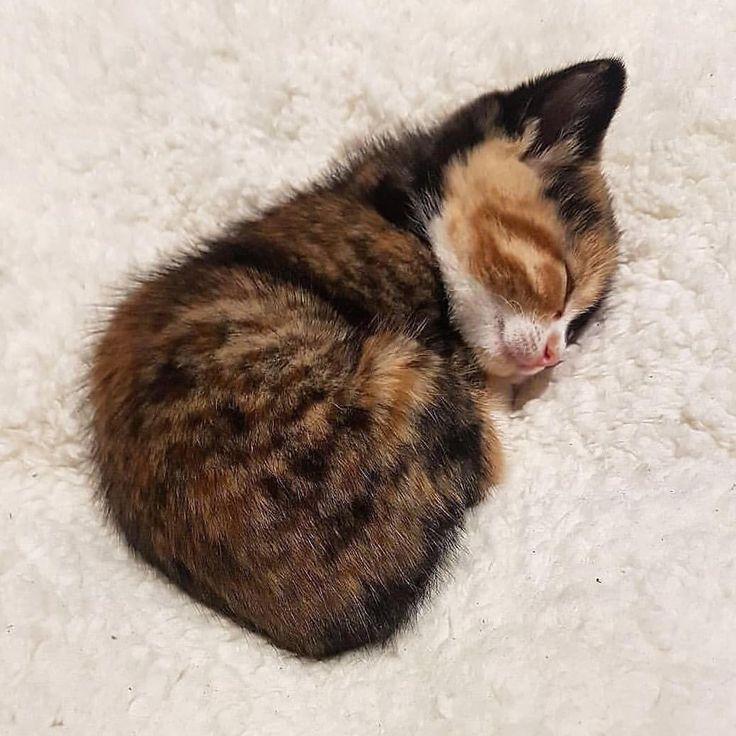 itty bitty kitty so sleepy – #ball #bitty #itty #kitty #sleepy – mollige
