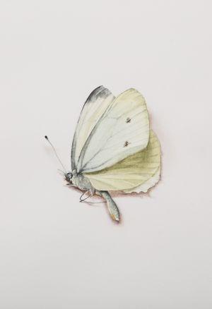Saara Vainio: Perhonen / Butterfly. Watercolour, 14 x 18 cm. 2011