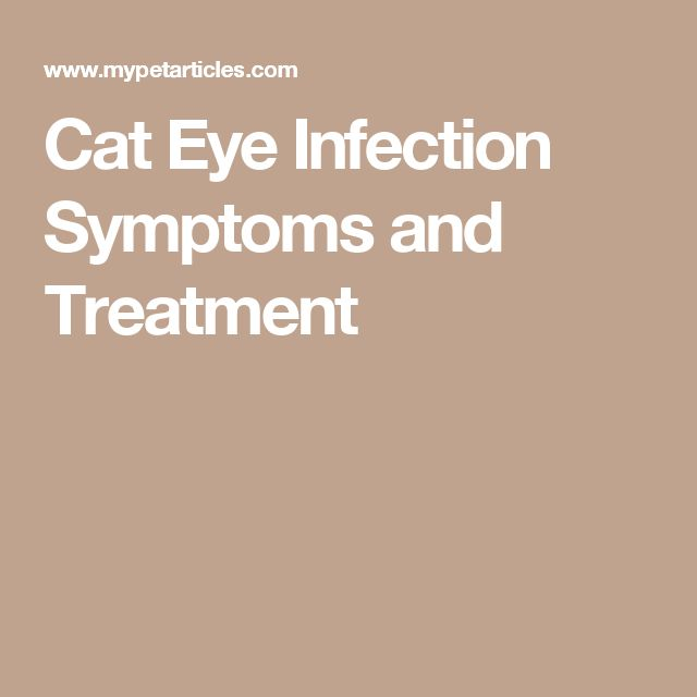 Cat Eye Infection Symptoms and Treatment