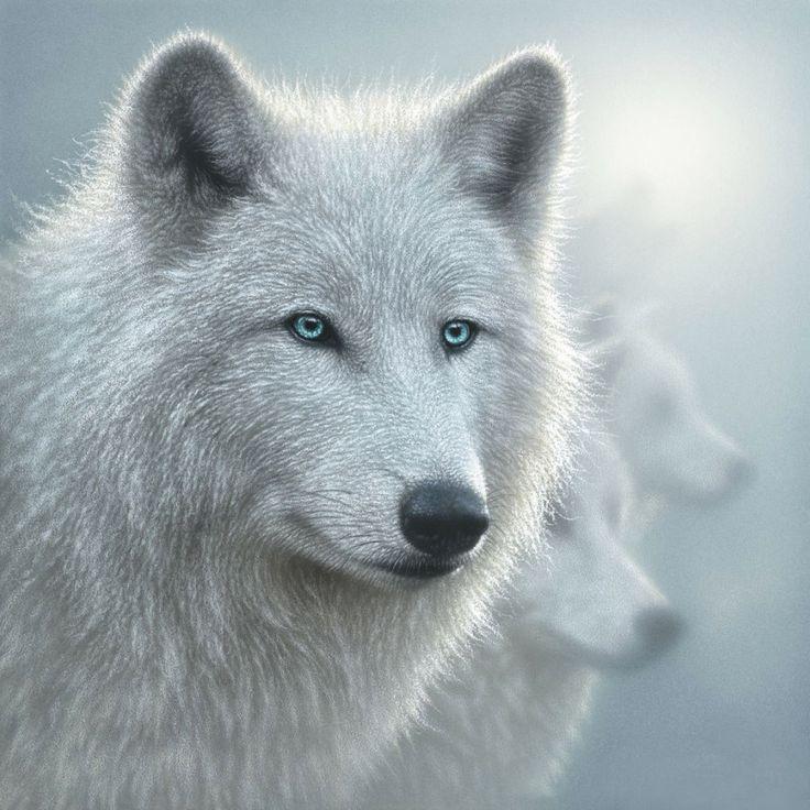 Картинки волчиц с голубыми глазами