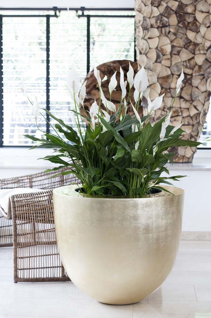 Le Spathiphyllum exhibe sa beauté racée dans une décoration épurée et raffinée qui évoque une nature domptée #déco #maplantemonbonheur #ecoluxe