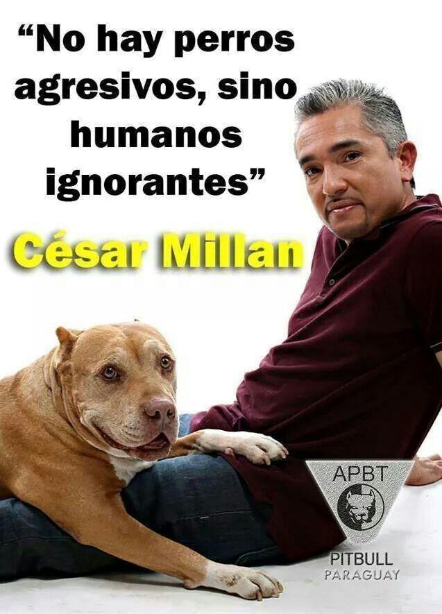 """""""No hay perros agresivos, hay humanos ignorantes"""" _César Millán"""