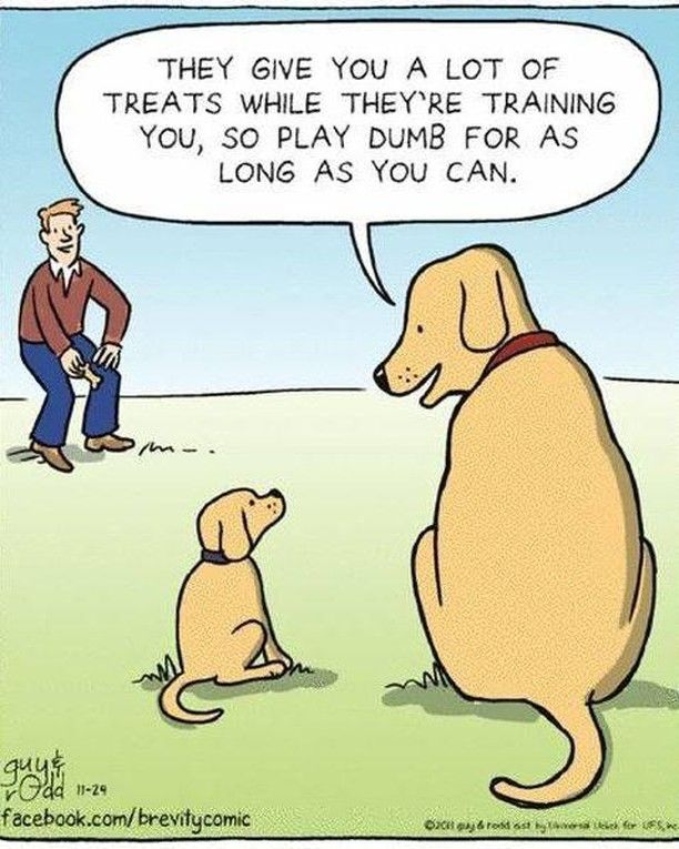 We Love These Cartoons Did You Feel Like Your Puppy Did This To