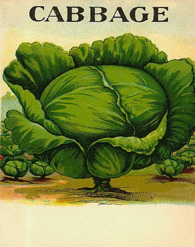 Vintage Cabbage Food Label