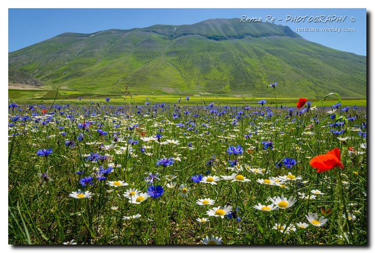 © Castelluccio Flowers http://www.photoone.org/editors-award-honorable/editor-award-honorable-september-2013-6025.html/attachment/20-09-2013-photo-by-renzo-re Photo One - EDITOR'S CHOICE AWARD- HONORABLE MENTION Renzo Re - PHOTOGRAHY © http://renzore.weebly.com