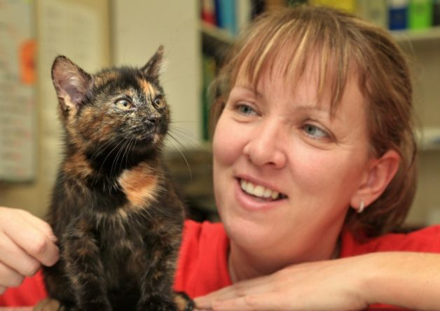 One of world's rarest cats given to rescue centre - HE's a cat that defies genetics – a 400,000-to-one shot thought to be one of Scotland's rarest moggies.  Little Harry has raised eyebrows among experts at an animal welfare charity – by being one of the few male tortoiseshells in the world.