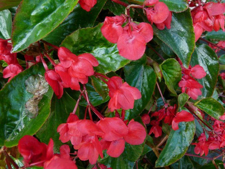 10 best Kvtiny ze zahrady images on Pinterest Flowers Plants