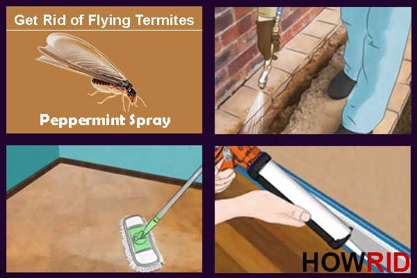 How to Get Rid of Flying Termites (Winged Termites)?  In this article, we are discussing how to get rid of flying termites (winged termites)? The most common termite noticed is the flying termite. They come in groups and look much like termites. They go directly to light sources and will enter your home through windows or cracks. These fliers are...  #Ants, #BedBugs, #BestWaysToGetRidOfFlyingTermites, #BestWaysToTreatFlyingTermites, #Bugs, #CureFlyingTermites, #FastTreatmen
