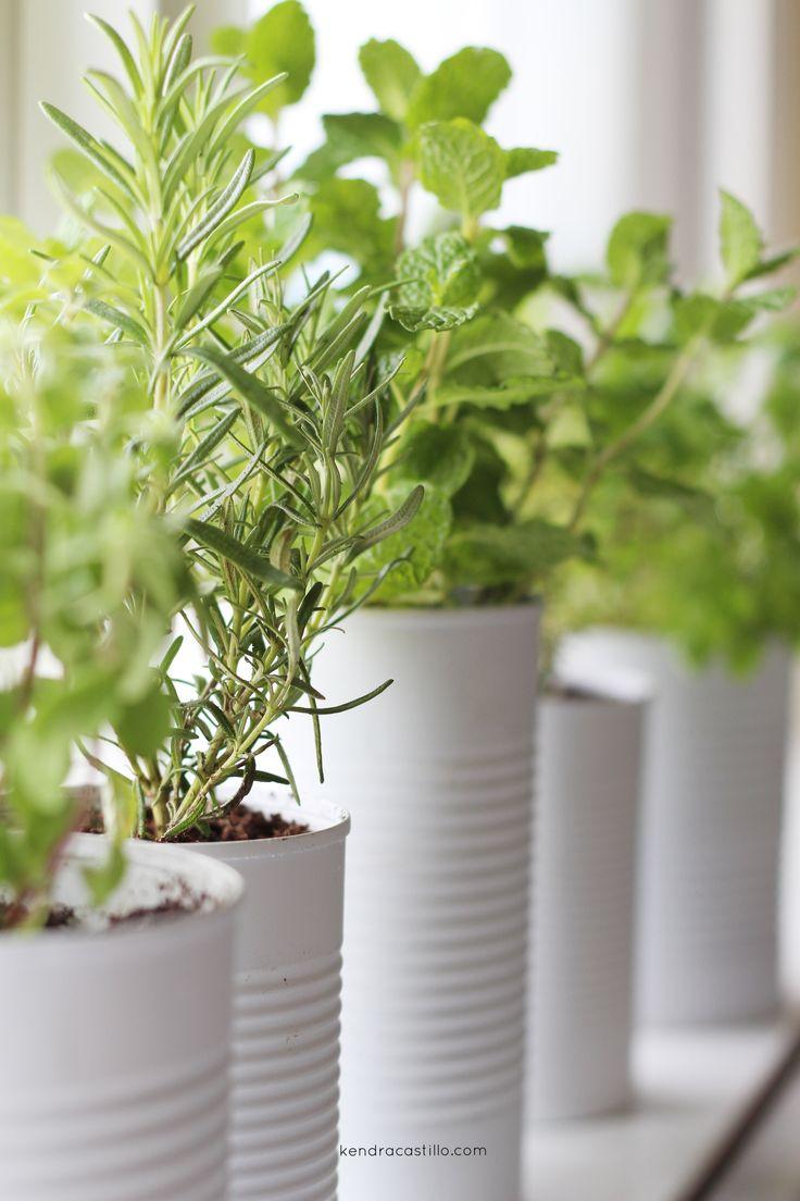 Pinterest 상의 Gardening에 관한 상위 134개 이미지 - 정원, 광고 및 뒤뜰Gardening - 웹