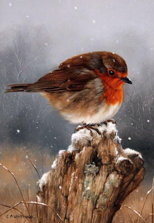 CARL ANDREW WHITFELD BIRD PAINTING