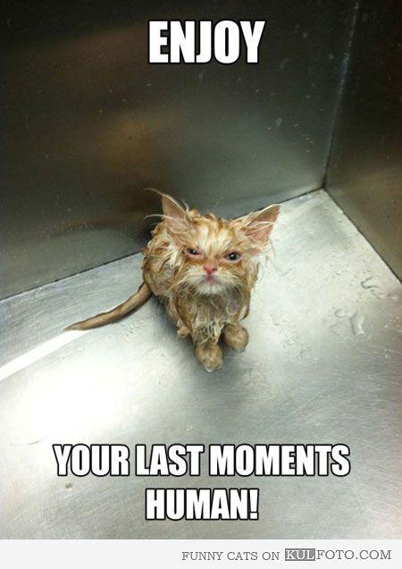 Kitten wrath