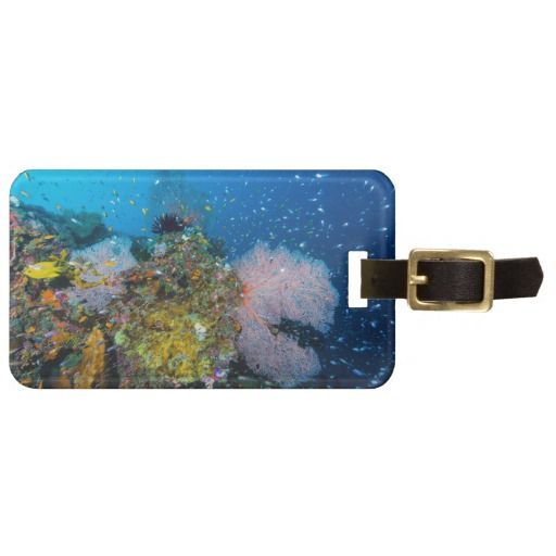 A beautiful luggage tag featuring the abundant tropical fish and colorful coral that are a hallmark of Australia's Great Barrier Reef. Situated in the Coral Sea it has been voted one of the seven natural wonders of the world. This photo shows 3 coral fans with schools of tropical fish. #fish #coral #tropicalfish #reef #scuba #animals #marine #australia