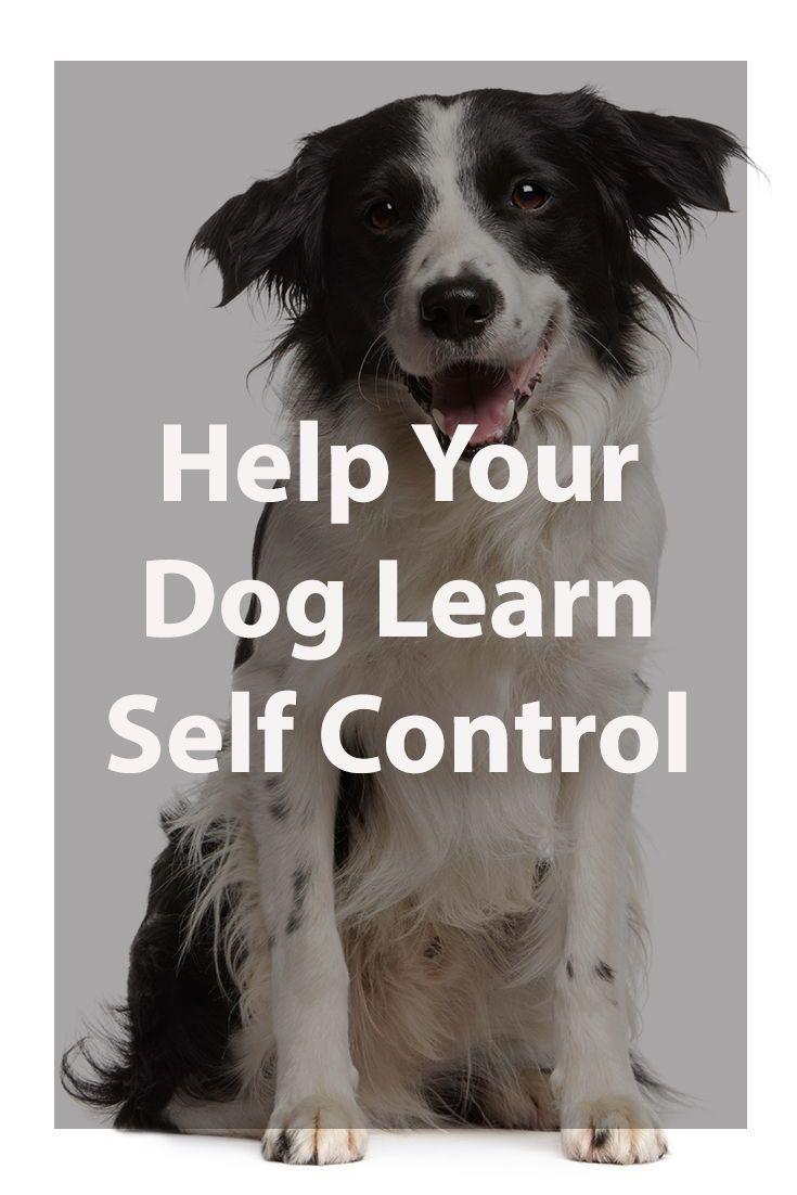 Impulse Control For Dogs Dogs Dog Training British Mastiff