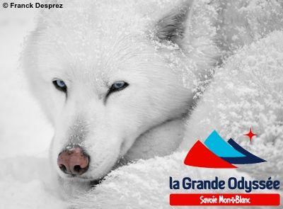 La Grande Odyssée 2014 : Le Grand départ samedi 11 janvier - http://www.trackandnews.fr/2014/01/la-grande-odyssee-2014-le-grand-depart-samedi-11-janvier/