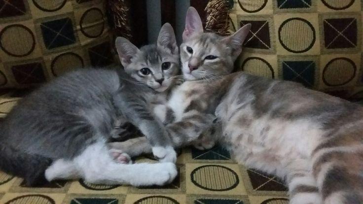 Love. Sleep together.. 😆😆😴😴