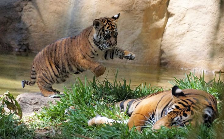 Teen sexually assaulted in Tiger Tiger after being